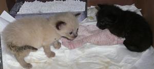 2-mato10 dans Les 5 chatons