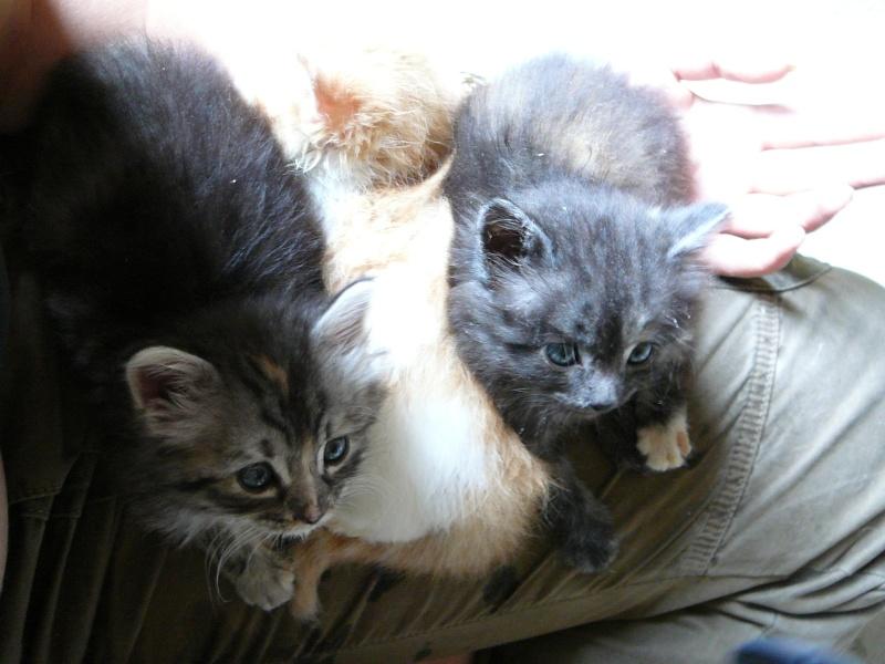 3 chatons jeté par dessus un grillage dans Dwight - Destiny et Diddle p1020514